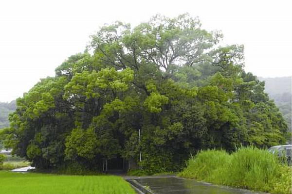 田中神社之森